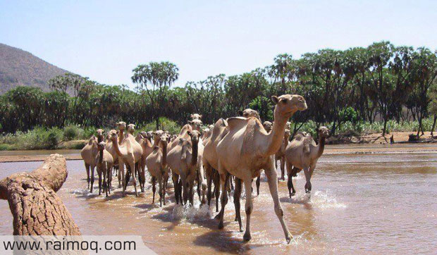 Eritrea-Gash-Barka-620
